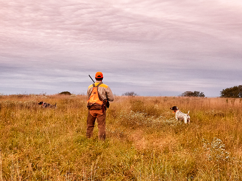 Take dog tracking and training to the next level.