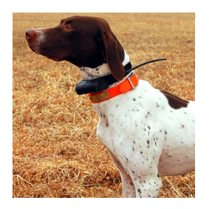 DC™ 30 Dog Tracking Collar 1