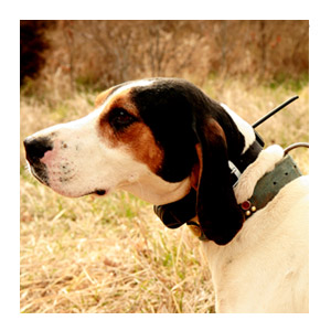 DC™ 30 Dog Tracking Collar 2