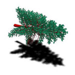 Pine Power